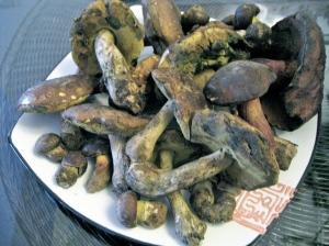 Niu Gan Jun (Porcini) Mushrooms