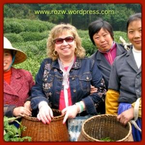 Tea pickers in a tea plantation, Mai Jia Wu, Hangzhou, China